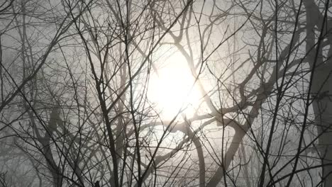 Pans-Sun-Through-Barren-Branches