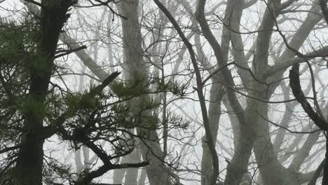 Pine-And-Deciduous-Branches-In-Fog