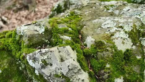 Pull-Back-On-Moss-Covered-Rock