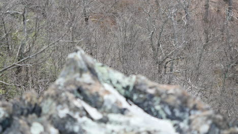 Rock-Filled-With-Water-Comes-Into-Focus