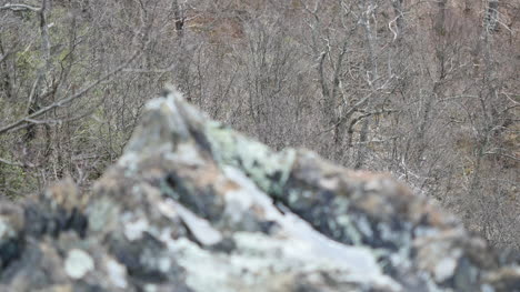Rock-With-Water-Comes-Into-Focus