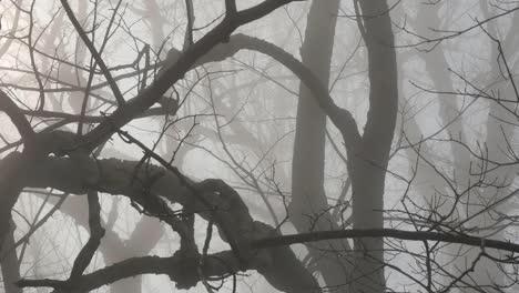 Strange-Big-Branches-In-Fog