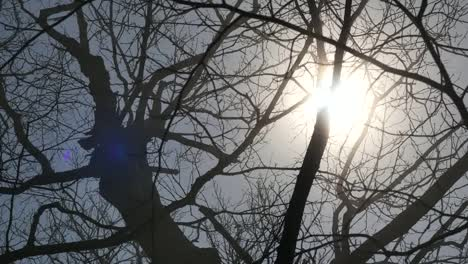 Sun-Shines-Through-Leafless-Branches