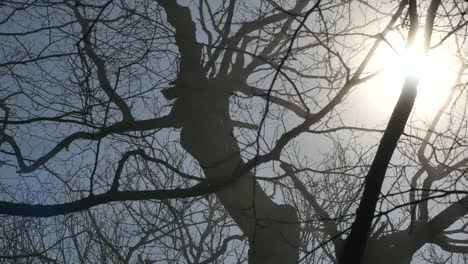 Sun-Shinning-Through-Leafless-Branches