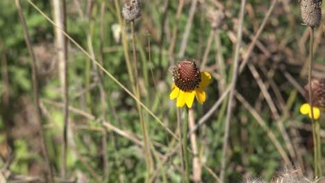 Flor-Del-Cono-Amarillo-Y-Marrón-De-La-Costa-Del-Golfo-De-Texas