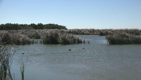 Texas-Leonabelle-Turnbull-Birding-Center-Flying-Birds