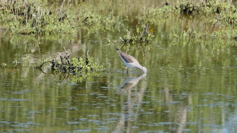 Texas-Bird-Reflected-In-Water