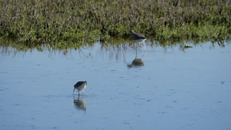 Texas-Birds-Feeding-In-Shallow-Water