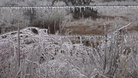 Texas-Icicles-On-Fence-And-Plants