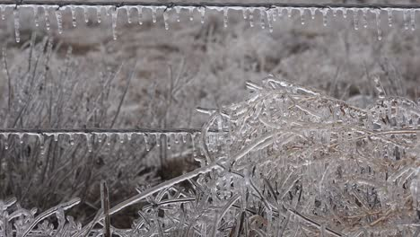 Texas-Icicles-On-Fence-And-Vegetation