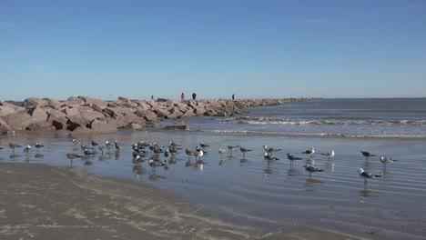 Texas-Sea-Gulls-And-Port-Aransas-Jetty