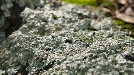 View-Of-Complex-Lichen