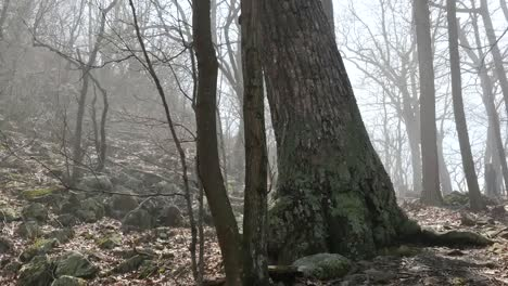 Virginia-Boy-En-Misty-Woods-Pan