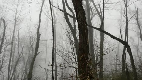 Virginia-Early-Spring-Trees-In-Fog