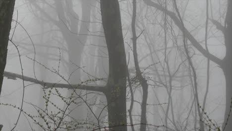 Virginia-Foggy-Foggy-Woods-Pan