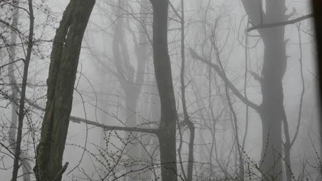Virginia-Foggy-Foggy-Woods