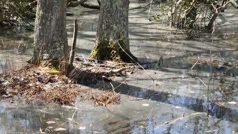 Virginia-Trees-Rise-From-Swampy-Water