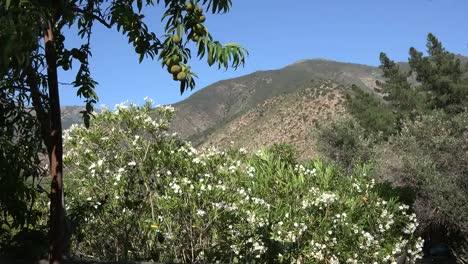 Melocotones-y-vista-de-Chile
