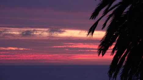 Chile-Sunset-And-Palm-Time-Lapse