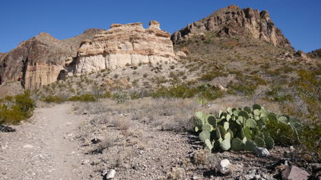 Texas-Big-Bend-Burro-Mesa-With-Opuntia