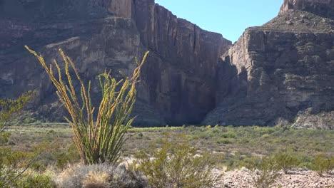 Texas-Big-Bend-Santa-Elena-Canyon-And-Sun-On-Ocotillo