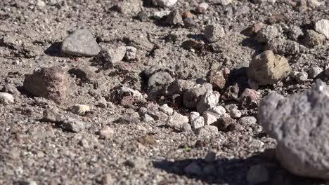 Texas-Big-Bend-Ants