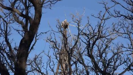 Texas-Big-Bend-Broken-Windmill-Through-Trees-Sam-Nail-Ranch