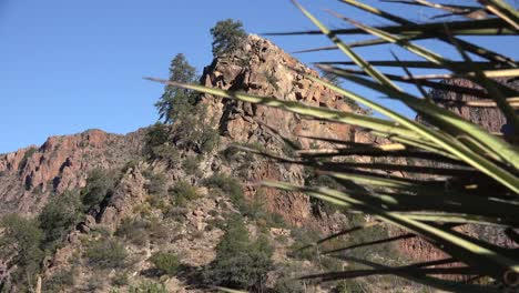 Texas-Big-Bend-View-With-Yucca-Zoom-In