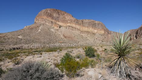 Texas-Big-Bend-Yucca-And-Mountain-View