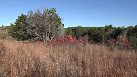 Texas-Hill-Country-Dry-Grass-And-Red-Sumac-Leaves