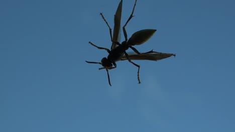 Texas-Wasp-On-Window