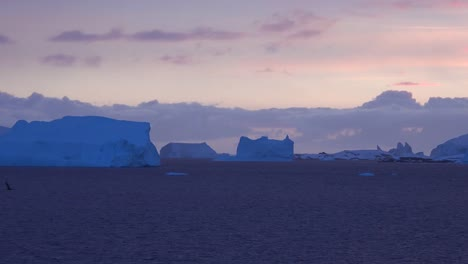 Antártida-Pasando-Icebergs-En-Luz-Púrpura-Con-Pájaro