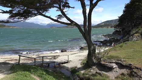 Argentina-Tree-And-Water-In-Tierra-Del-Fuego