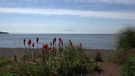Chile-Zooms-Past-Hot-Poker-Flowers-To-Volcano