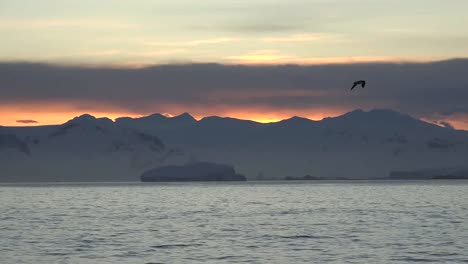 Antarctica-Bird-And-Sunrise