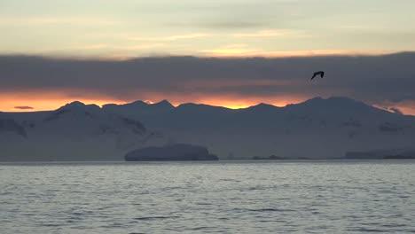 Pájaro-De-La-Antártida-Y-Amanecer-Antarctica-Bird-And-amanecer