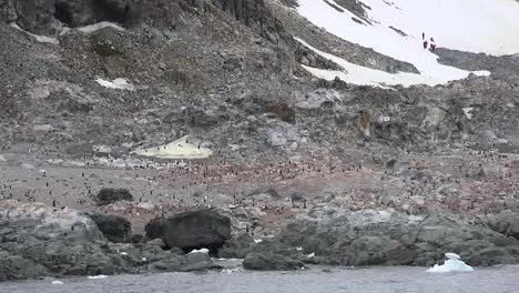 Antarctica-Rock-On-Shore-With-Penguins