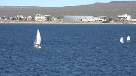 Argentina-Puerto-Madryn-Several-Sailboats