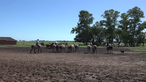 Argentina-Estancia-Horses-Run-With-Dog