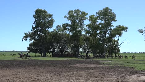 Argentina-Estancia-Landscape-With-Trees-And-Horses