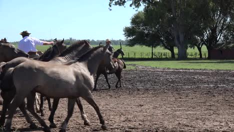 Argentina-Herds-Of-Horses-At-Estancia