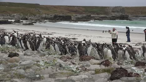 Falklands-Penguins-And-Photographer