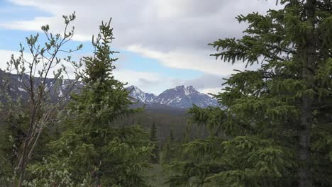 Alaska-Denali-Park-Mountain-And-Trees