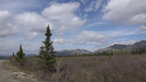 Alaska-Denali-Park-Spruce-Trees-And-Clouds