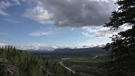 Alaska-Denali-Park-View-With-Bird