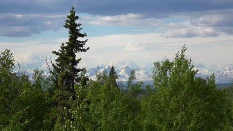 Alaska-Denali-Framed-By-Trees-In-Wind