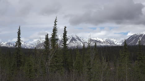 Alaska-Denali-Park-Mountain-View-With-Spruce