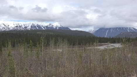 Alaska-Denali-Trees-By-River