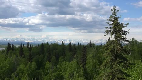 Alaska-Mount-Denali-Zooms-In-Past-Tree