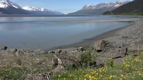 Alaska-Turnagain-Arm-With-Dandelions